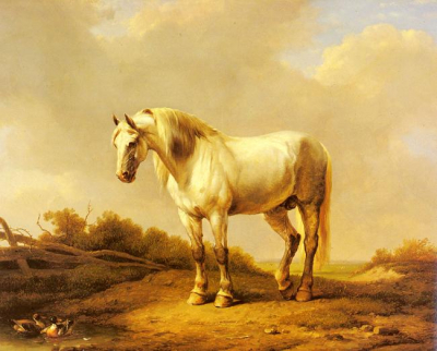A White Stallion In A Landscape