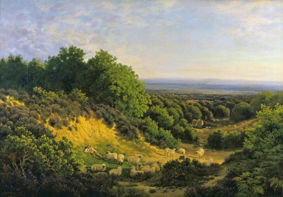 The Evening Sun - View on Ewhurst Hill near Guildford