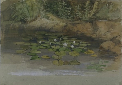 Study of Waterlilies and Other Plants