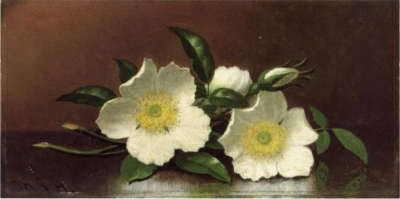 Two Cherokee Rose Blossoms on a Table