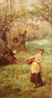 Gathering Apples, Normandy