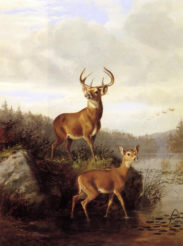 Buck and Doe II