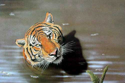 Tiger Paintings N026