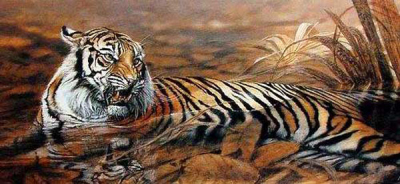 Tiger Paintings N021