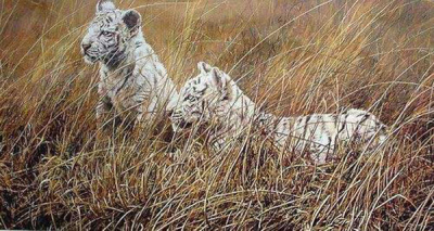 Tiger Paintings N023