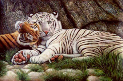 Tiger Paintings N017