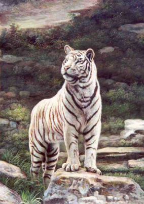Tiger Paintings N014