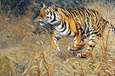 Tiger Paintings N022