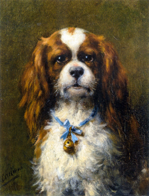A King Charles Spaniel with a Blue Ribbon