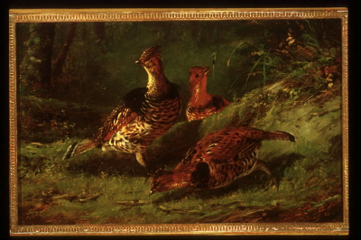 Ruffed Grouse, Summer
